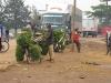 Kochbananen werden zum Markt gebracht